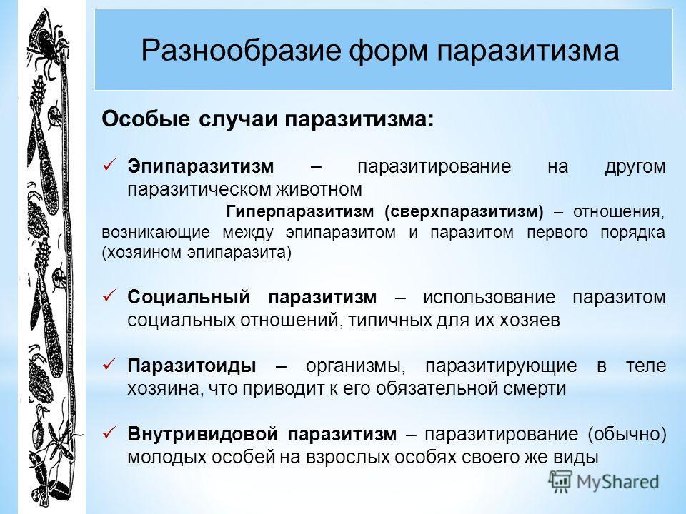 Разнообразие форм паразитизма Особые случаи паразитизма: Эпипаразитизм – паразитирование на другом паразитическом животном Гиперпаразитизм (сверхпаразитизм) – отношения, возникающие между эпипаразитом и паразитом первого порядка (хозяином эпипаразита