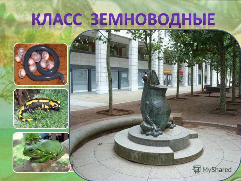 Отряд Безногие (червяги) Отряд Хвостатые (саламандры, тритоны) Отряд Бесхвостые (лягушки, жабы, квакши)