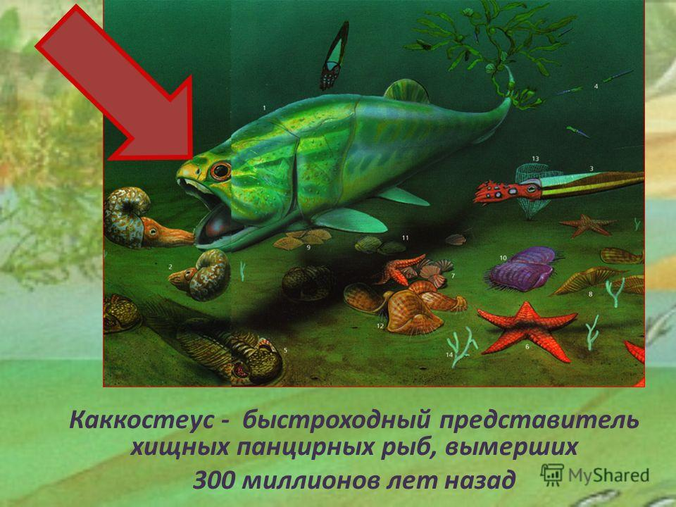 Каккостеус - быстроходный представитель хищных панцирных рыб, вымерших 300 миллионов лет назад