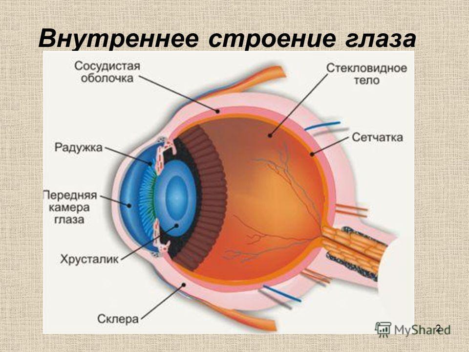 1 Тема: Глаза – путь во Вселенную
