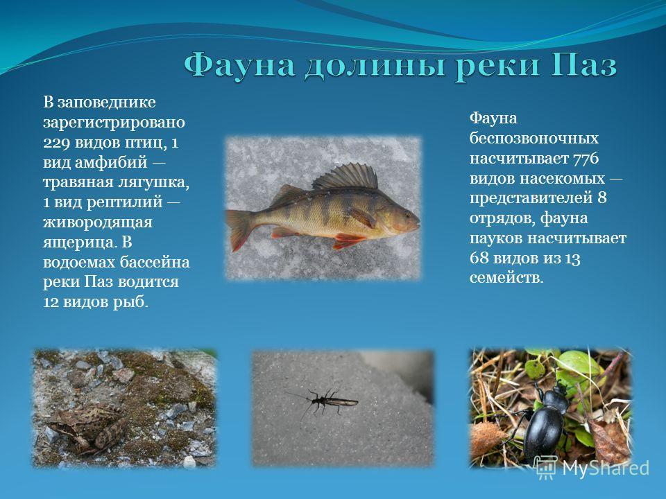 В заповеднике зарегистрировано 229 видов птиц, 1 вид амфибий травяная лягушка, 1 вид рептилий живородящая ящерица. В водоемах бассейна реки Паз водится 12 видов рыб. Фауна беспозвоночных насчитывает 776 видов насекомых представителей 8 отрядов, фауна