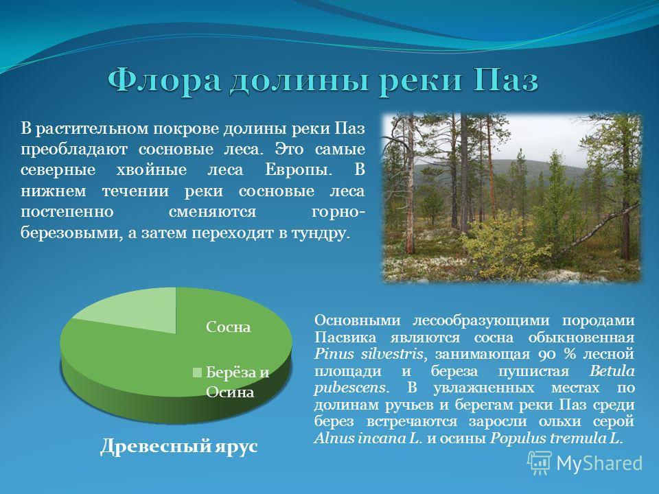 В растительном покрове долины реки Паз преобладают сосновые леса. Это самые северные хвойные леса Европы. В нижнем течении реки сосновые леса постепенно сменяются горно- березовыми, а затем переходят в тундру. Основными лесообразующими породами Пасви