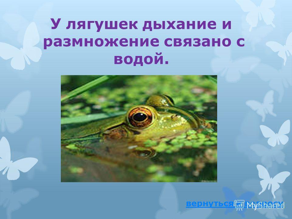 Почему лягушки не могут жить без воды? ответ
