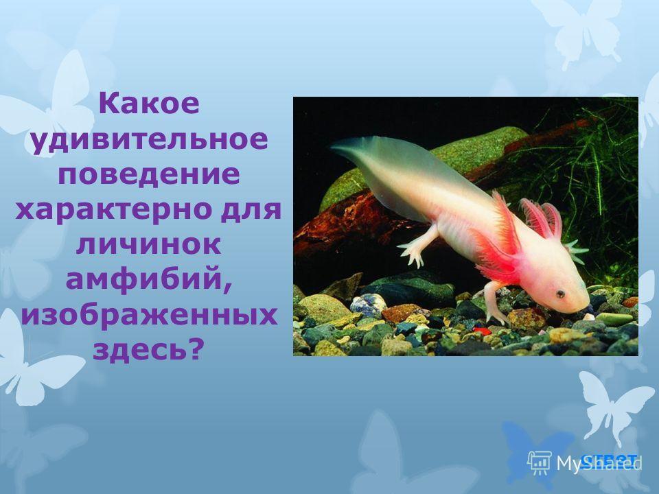 У лягушек дыхание и размножение связано с водой. вернуться к вопросу