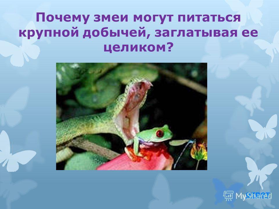 Эскулапова змея вернуться к вопросу водится в Южной Европе. Эта змея была изображена на жезле древнегреческого бога врачевания – Эскулапа. Змея, согласно легенде, помогла ему найти чудесное лекарственное растение.