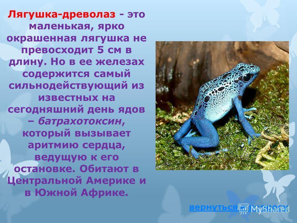 Какие лягушки обладают самым сильным ядом на Земле? ответ