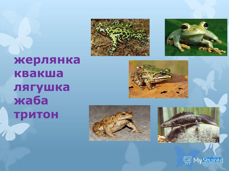 жерлянка жаба саламандра хамелеон тритон ответ