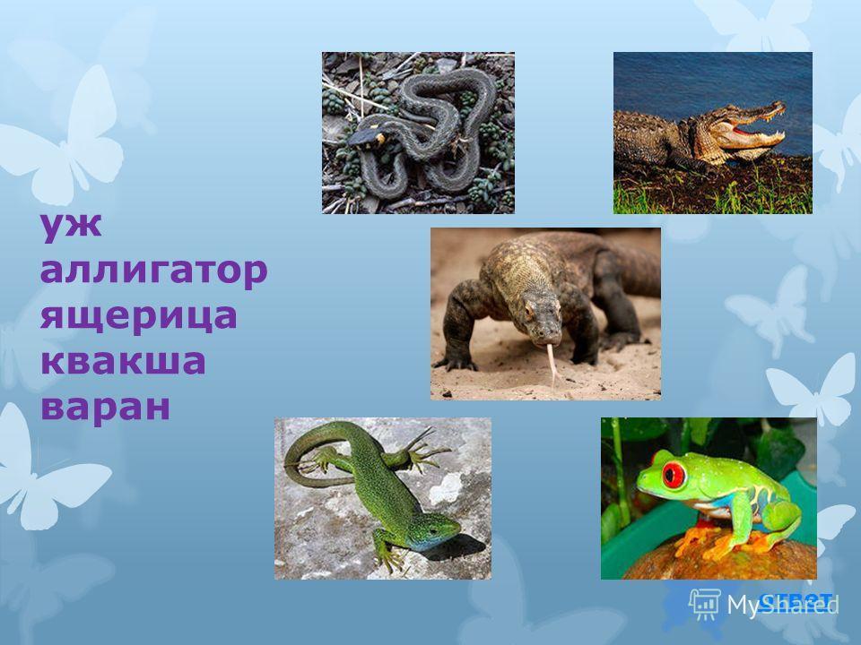гадюка уж веретеница кобра полоз ответ