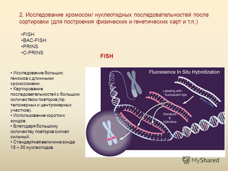 2. Исследование хромосом/ нуклеотидных последовательностей после сортировки (для построения физических и генетических карт и т.п.) FISH BAC-FISH PRINS C-PRINS FISH Исследование больших геномов с длинными хромосомами. Картирование последовательностей