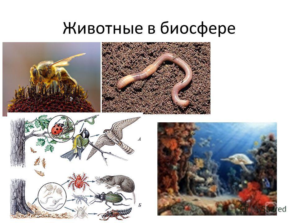 Животные в биосфере