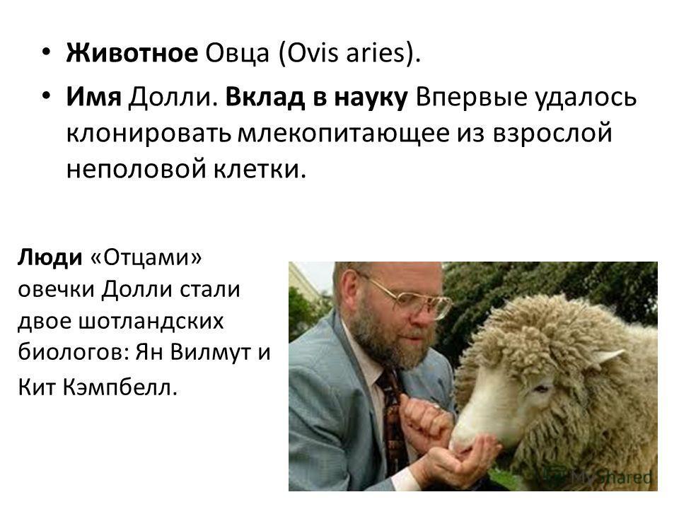 Животное Овца (Ovis aries). Имя Долли. Вклад в науку Впервые удалось клонировать млекопитающее из взрослой неполовой клетки. Люди «Отцами» овечки Долли стали двое шотландских биологов: Ян Вилмут и Кит Кэмпбелл.
