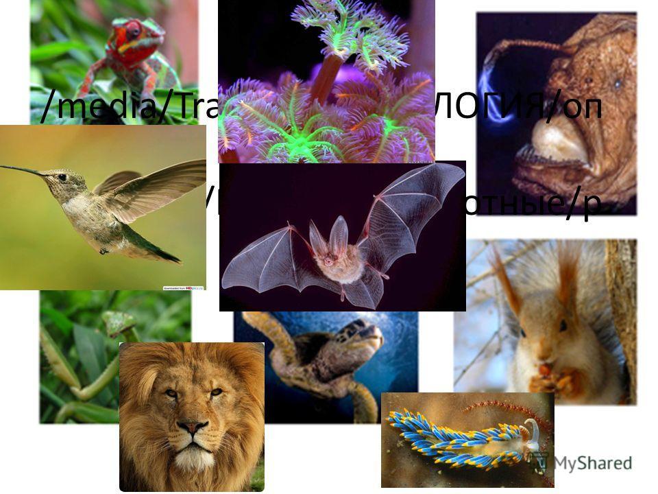 /media/Transcend/БИОЛОГИЯ/оп ределители, картинки/Картинки/животные/р азное1.jpg