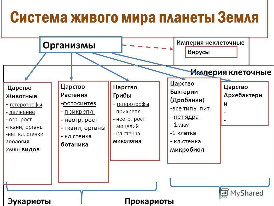Классификация организмов империя