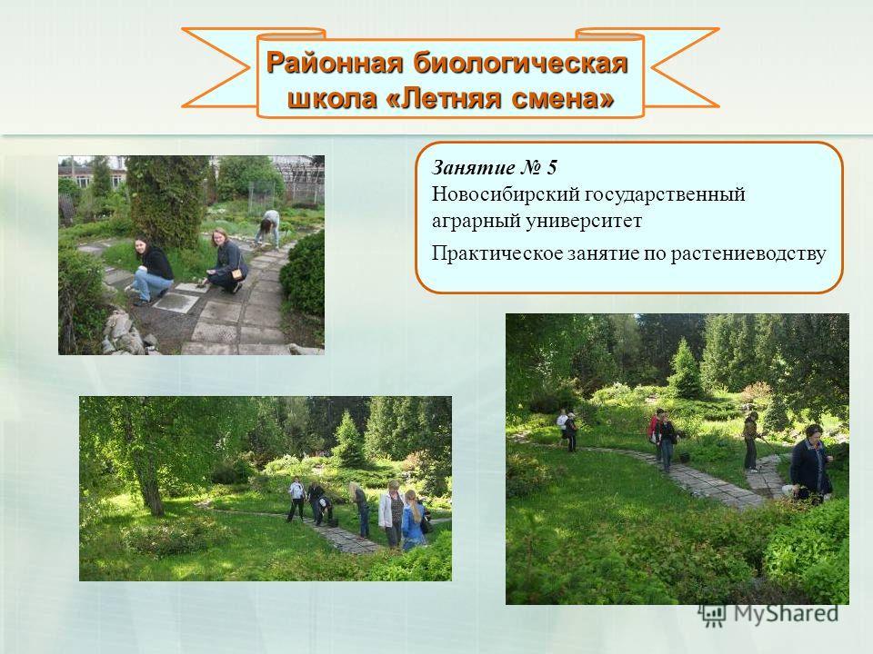 Районная биологическая школа «Летняя смена» Занятие 5 Новосибирский государственный аграрный университет Практическое занятие по растениеводству