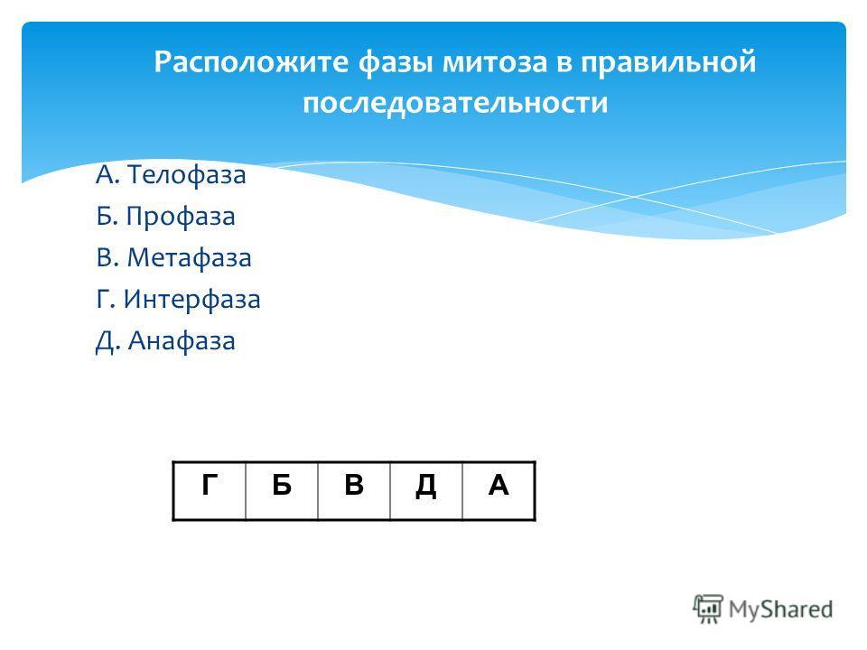 Расположите фазы митоза в правильной последовательности А. Телофаза Б. Профаза В. Метафаза Г. Интерфаза Д. Анафаза ГБВДА