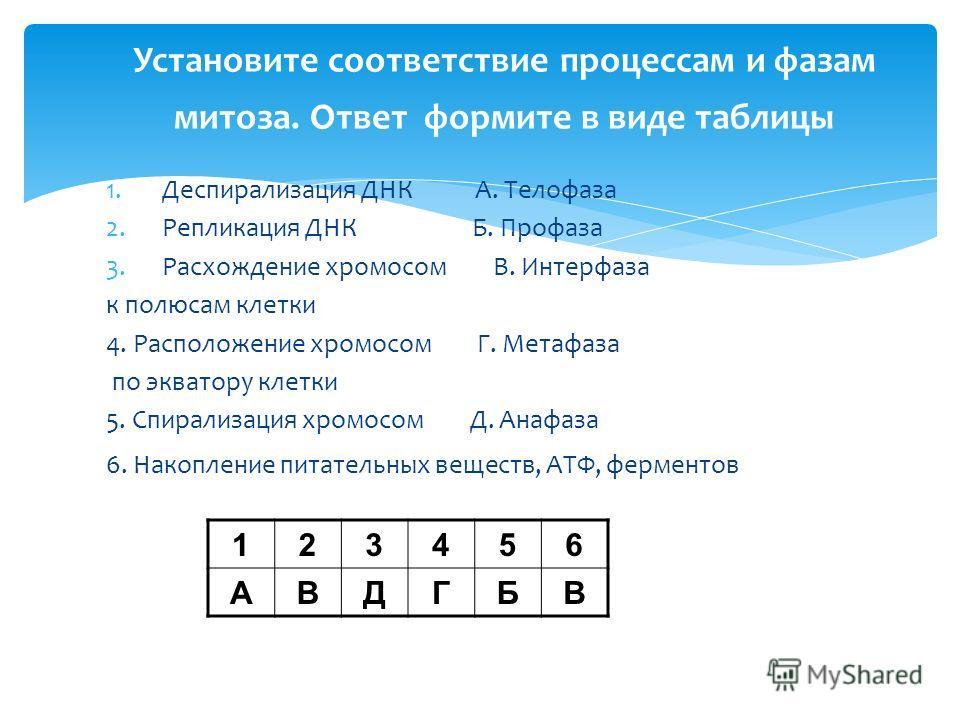 Установите соответствие процессам и фазам митоза. Ответ формите в виде таблицы 1.Деспирализация ДНК А. Телофаза 2.Репликация ДНК Б. Профаза 3.Расхождение хромосом В. Интерфаза к полюсам клетки 4. Расположение хромосом Г. Метафаза по экватору клетки 5