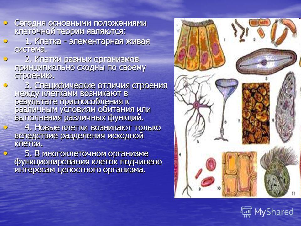 Сегодня основными положениями клеточной теории являются: Сегодня основными положениями клеточной теории являются: 1. Клетка - элементарная живая система. 1. Клетка - элементарная живая система. 2. Клетки разных организмов принципиально сходны по свое