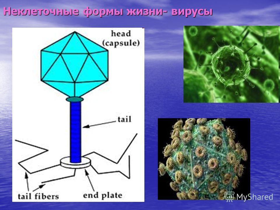 Неклеточные формы жизни- вирусы