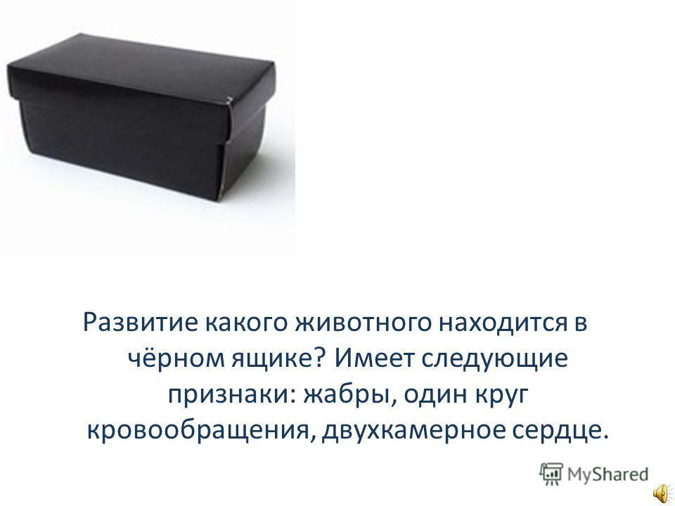 Развитие какого животного находится в чёрном ящике? Имеет следующие признаки: жабры, один круг кровообращения, двухкамерное сердце.