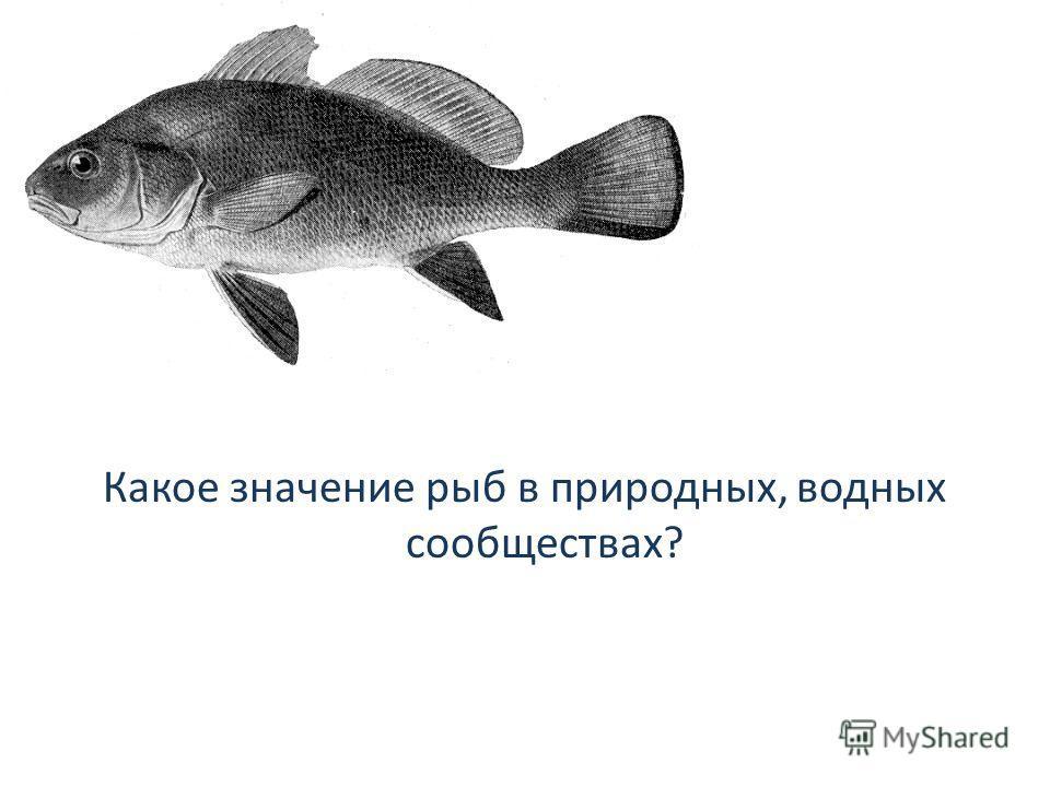 Какое значение рыб в природных, водных сообществах?