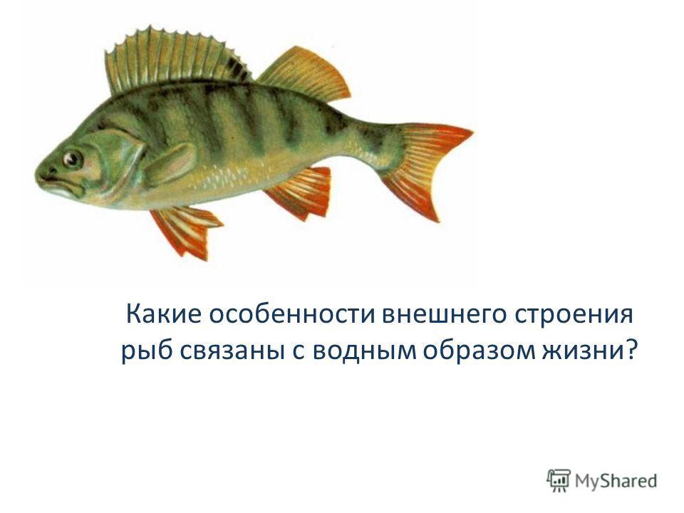 Какие особенности внешнего строения рыб связаны с водным образом жизни?