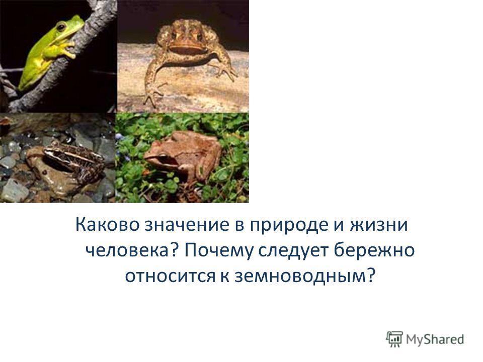 Каково значение в природе и жизни человека? Почему следует бережно относится к земноводным?