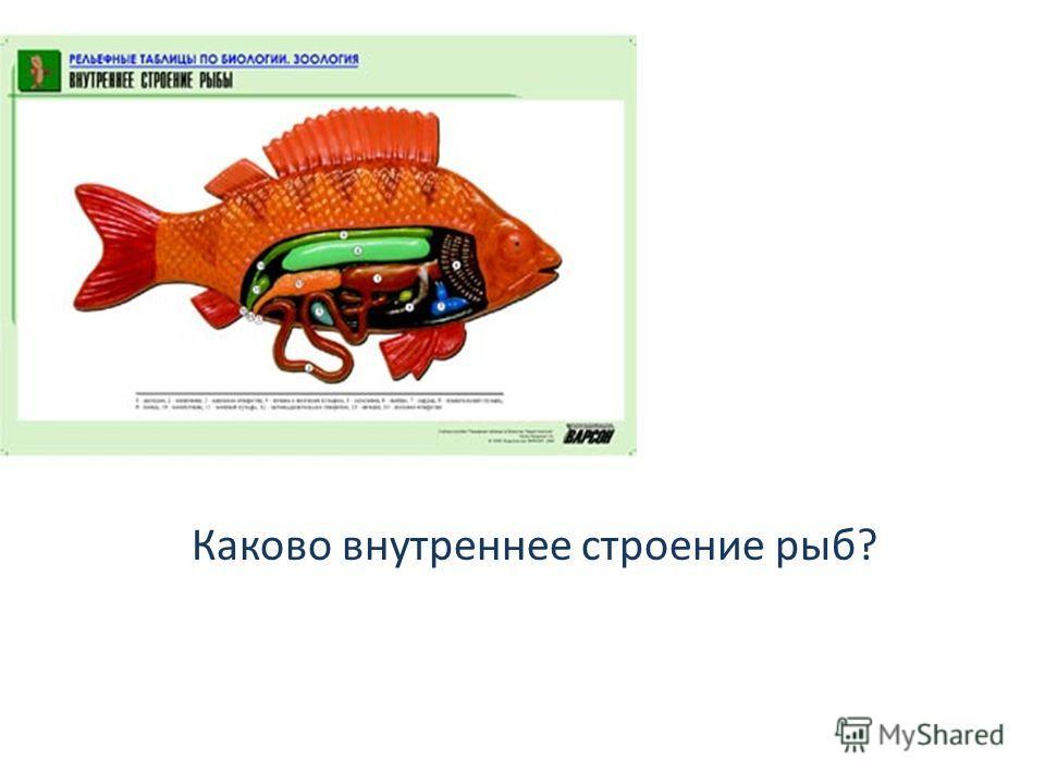 Каково внутреннее строение рыб?
