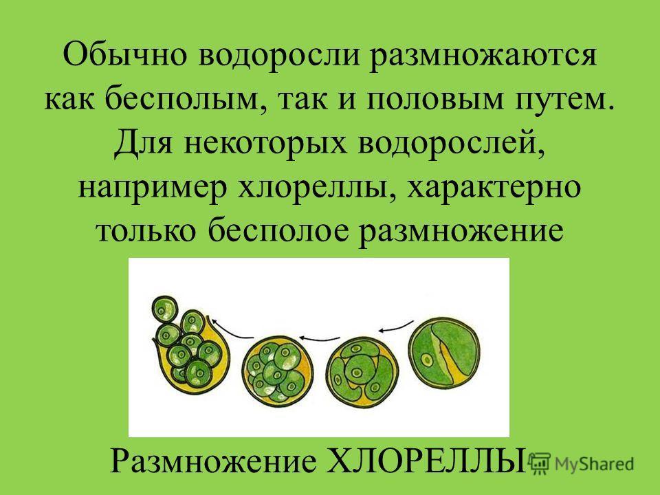 Обычно водоросли размножаются как бесполым, так и половым путем. Для некоторых водорослей, например хлореллы, характерно только бесполое размножение Размножение ХЛОРЕЛЛЫ