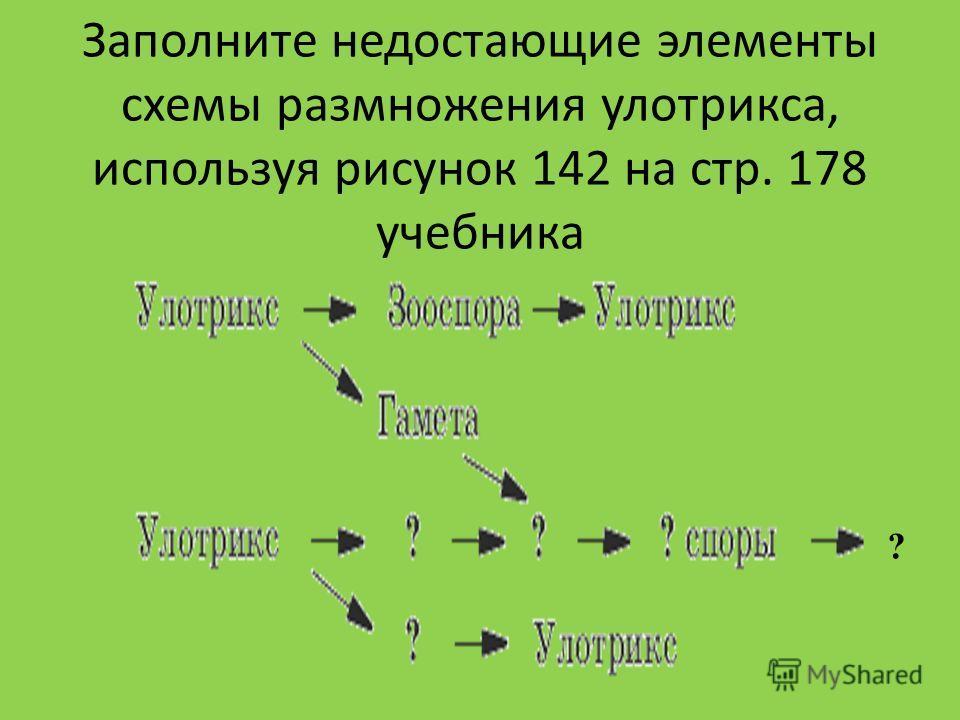 Заполните недостающие элементы схемы размножения улотрикса, используя рисунок 142 на стр. 178 учебника ?