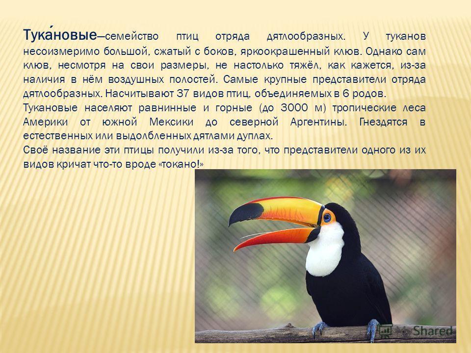 Тукановые семейство птиц отряда дятлообразных. У туканов несоизмеримо большой, сжатый с боков, яркоокрашенный клюв. Однако сам клюв, несмотря на свои размеры, не настолько тяжёл, как кажется, из-за наличия в нём воздушных полостей. Самые крупные пред