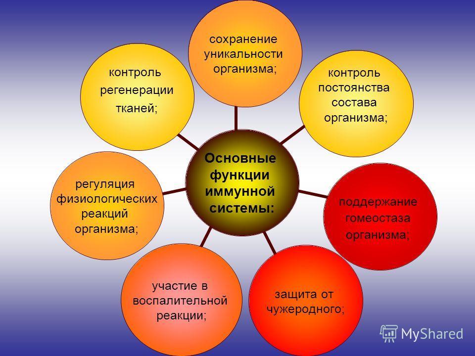 Основные функции иммунной системы: сохранение уникальности организма; контроль постоянства состава организма; поддержание гомеостаза организма; защита от чужеродного; участие в воспалительной реакции; регуляция физиологических реакций организма; конт