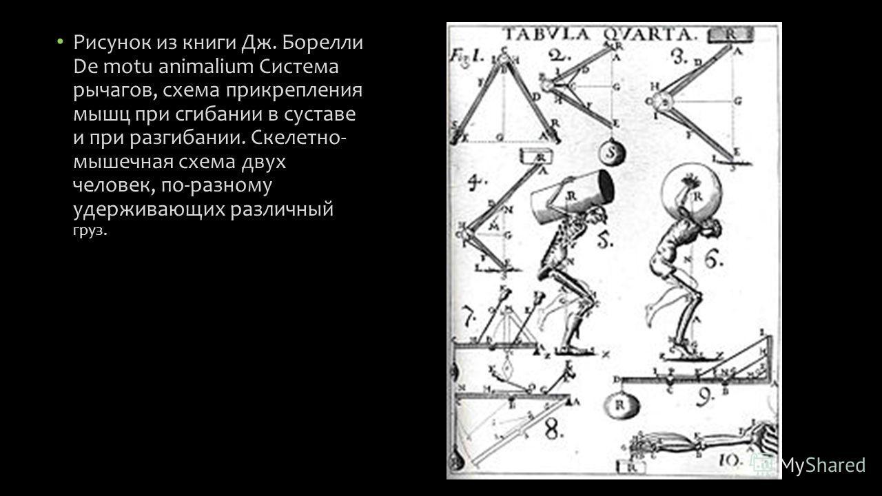 Рисунок из книги Дж. Борелли De motu animalium Система рычагов, схема прикрепления мышц при сгибании в суставе и при разгибании. Скелетно- мышечная схема двух человек, по-разному удерживающих различный груз.