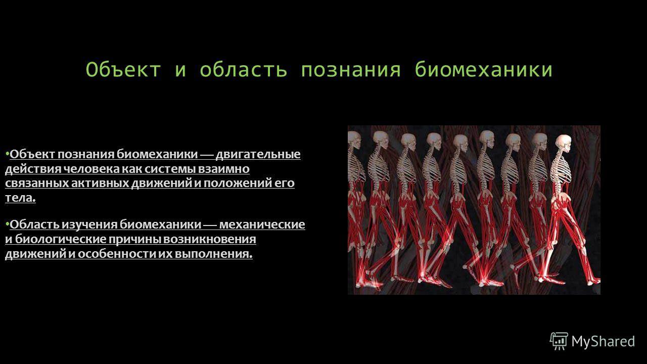 Объект и область познания биомеханики Объект познания биомеханики двигательные действия человека как системы взаимно связанных активных движений и положений его тела. Область изучения биомеханики механические и биологические причины возникновения дв
