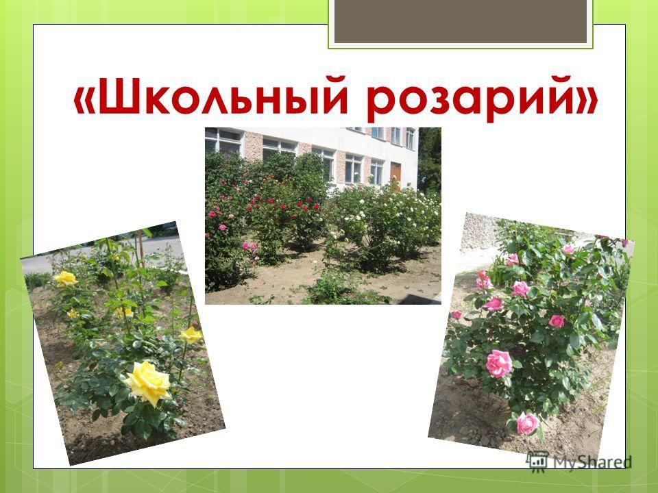 «Школьный розарий»