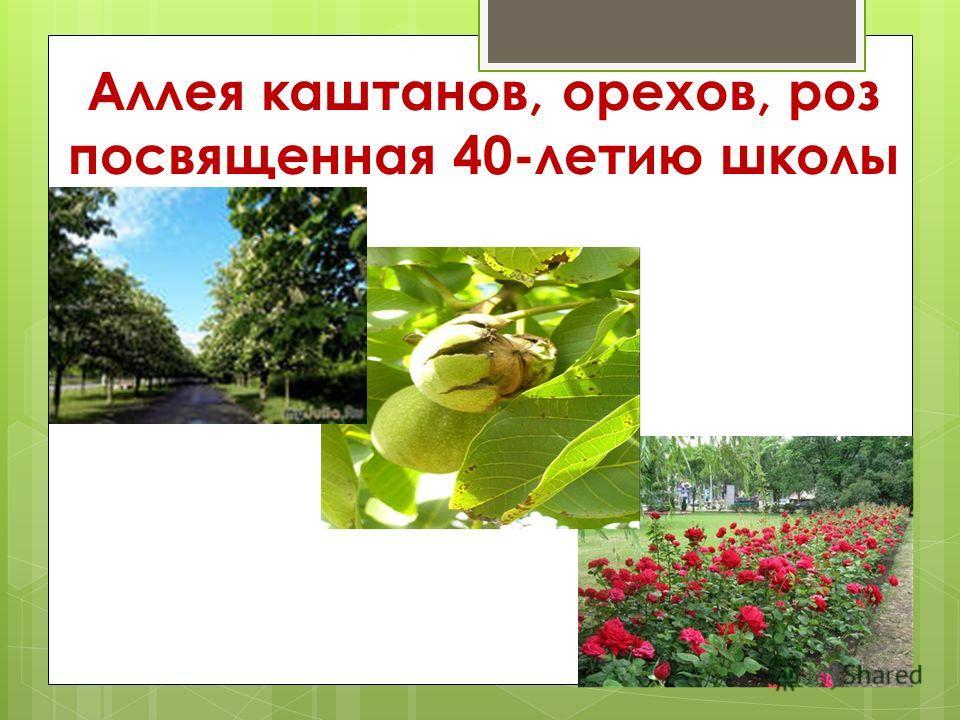 Аллея каштанов, орехов, роз посвященная 40-летию школы