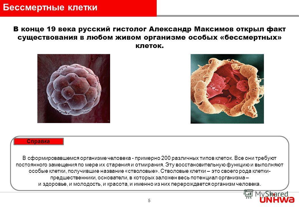5 В конце 19 века русский гистолог Александр Максимов открыл факт существования в любом живом организме особых «бессмертных» клеток. В сформировавшемся организме человека - примерно 200 различных типов клеток. Все они требуют постоянного замещения по