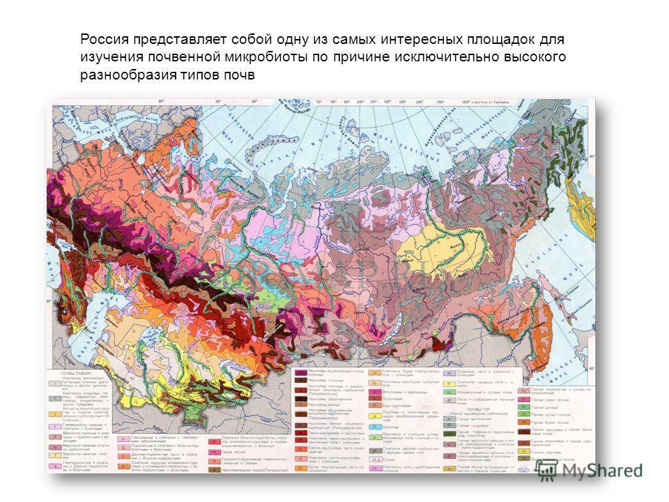 Россия представляет собой одну из самых интересных площадок для изучения почвенной микробиоты по причине исключительно высокого разнообразия типов почв