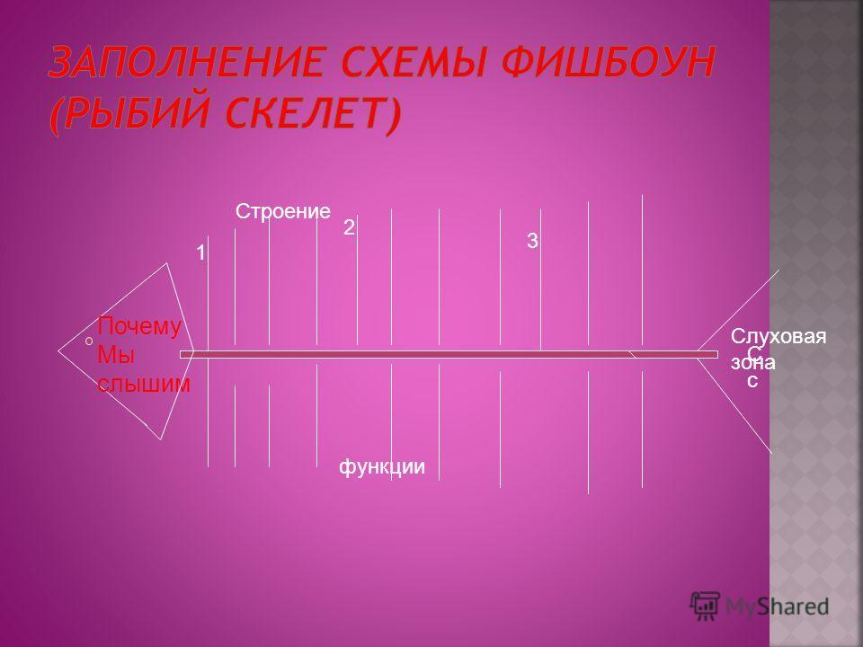 Почему Мы слышим 1 3 2 функции СсСс Слуховая зона Строение