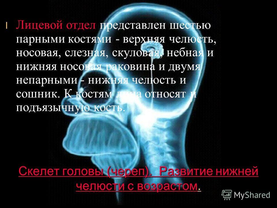 Скелет головы (череп). Содержание. Скелет головы (череп). Швы, с помощью которых соединяются кости черепа, различны: плоские швы (кости лицевого отдела прилегают друг к другу ровными краями), чешуйчатые швы (соединения чешуи височной кости с теменной