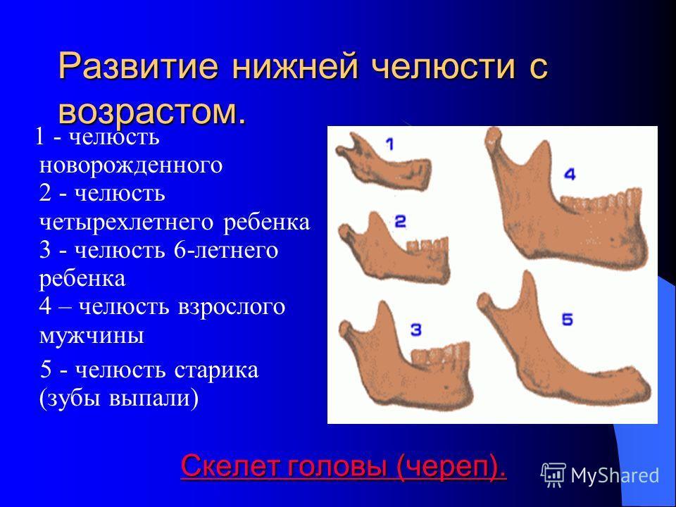 Скелет головы (череп). Скелет головы (череп).Скелет головы (череп).Скелет головы (череп). Мозговой отдел черепа составляют две парные кости - височная и теменная и четыре непарные - лобная, решетчатая, клиновидная и затылочная Скелет головы (череп).