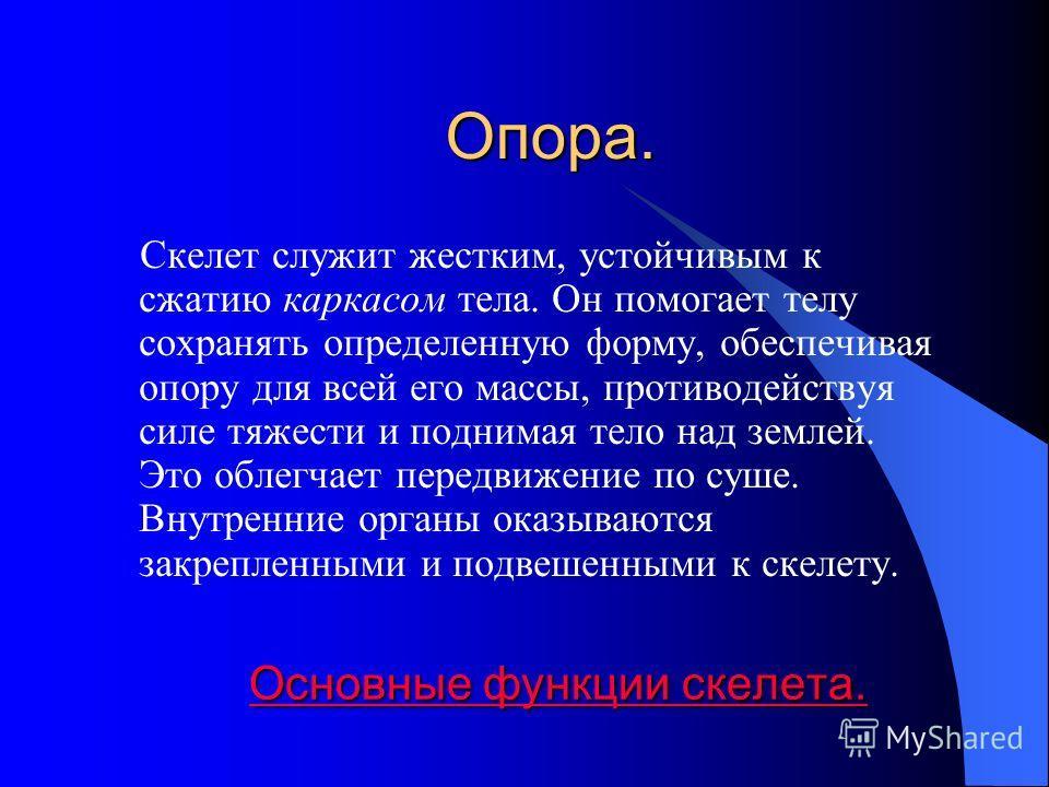Содержание l Опора. Опора l Защита Защита l Локомоция Локомоция Основные функции скелета: