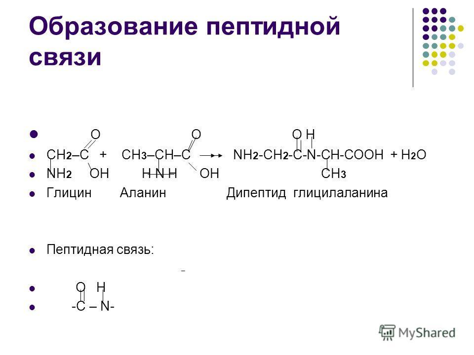 Дипептид фото