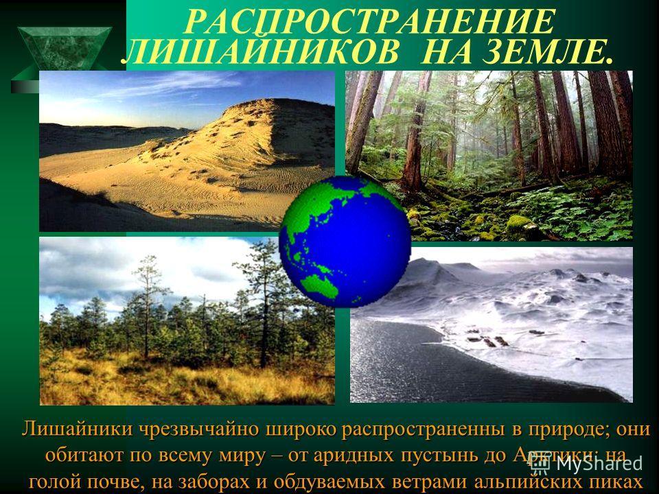 РАСПРОСТРАНЕНИЕ ЛИШАЙНИКОВ НА ЗЕМЛЕ. Лишайники чрезвычайно широко распространенны в природе; они обитают по всему миру – от аридных пустынь до Арктики: на голой почве, на заборах и обдуваемых ветрами альпийских пиках