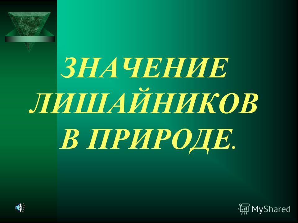 ЗНАЧЕНИЕ ЛИШАЙНИКОВ В ПРИРОДЕ.
