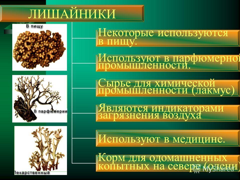 ЛИШАЙНИКИ Некоторые используются в пищу. Используют в парфюмерной промышленности. Сырье для химической промышленности (лакмус). Являются индикаторами загрязнения воздуха. Используют в медицине. Корм для одомашненных копытных на севере (олени).