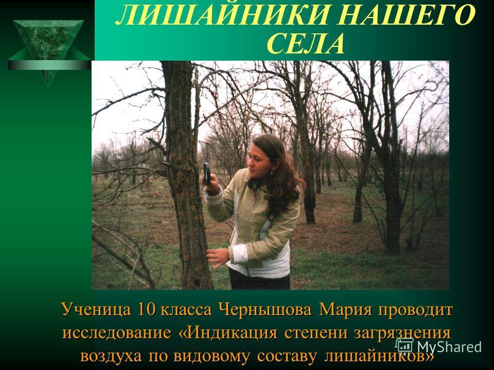 ЛИШАЙНИКИ НАШЕГО СЕЛА Ученица 10 класса Чернышова Мария проводит исследование «Индикация степени загрязнения воздуха по видовому составу лишайников»