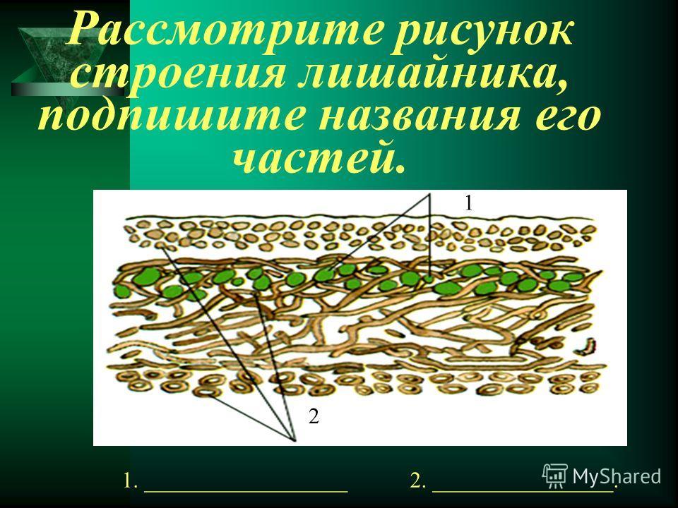 Рассмотрите рисунок строения лишайника, подпишите названия его частей. 1. __________________2. ________________. 1 2