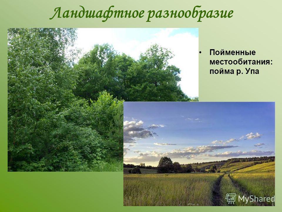 Ландшафтное разнообразие Пойменные местообитания: пойма р. Упа