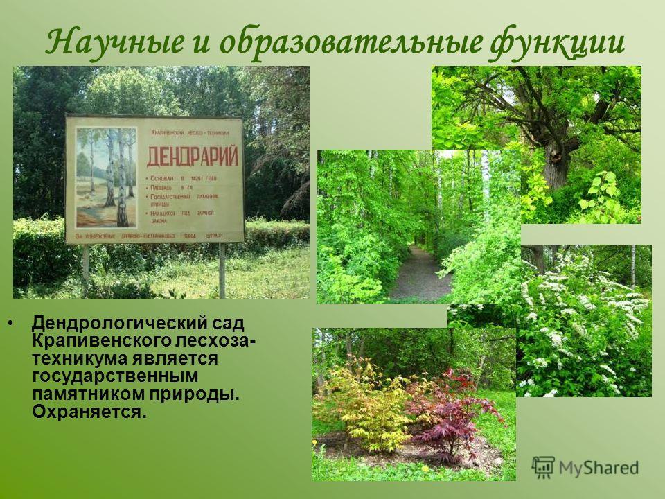 Дендрологический сад Крапивенского лесхоза- техникума является государственным памятником природы. Охраняется. Научные и образовательные функции