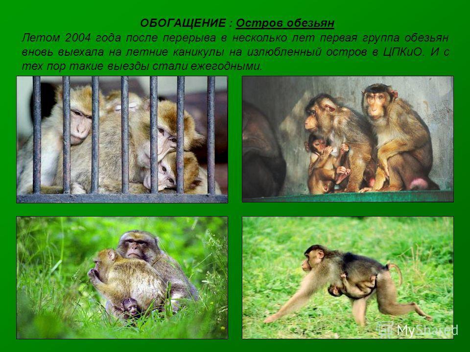 ОБОГАЩЕНИЕ : Остров обезьян Летом 2004 года после перерыва в несколько лет первая группа обезьян вновь выехала на летние каникулы на излюбленный остров в ЦПКиО. И с тех пор такие выезды стали ежегодными.